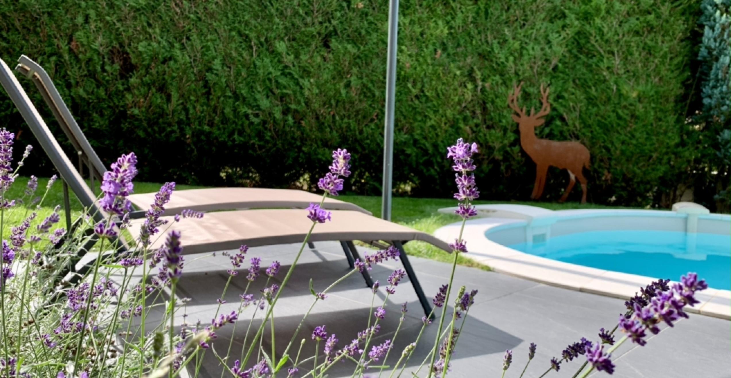 Piscine du gîte de l'écureuil à Sturzelbronn Moselle Vosges et Alsace du Nord